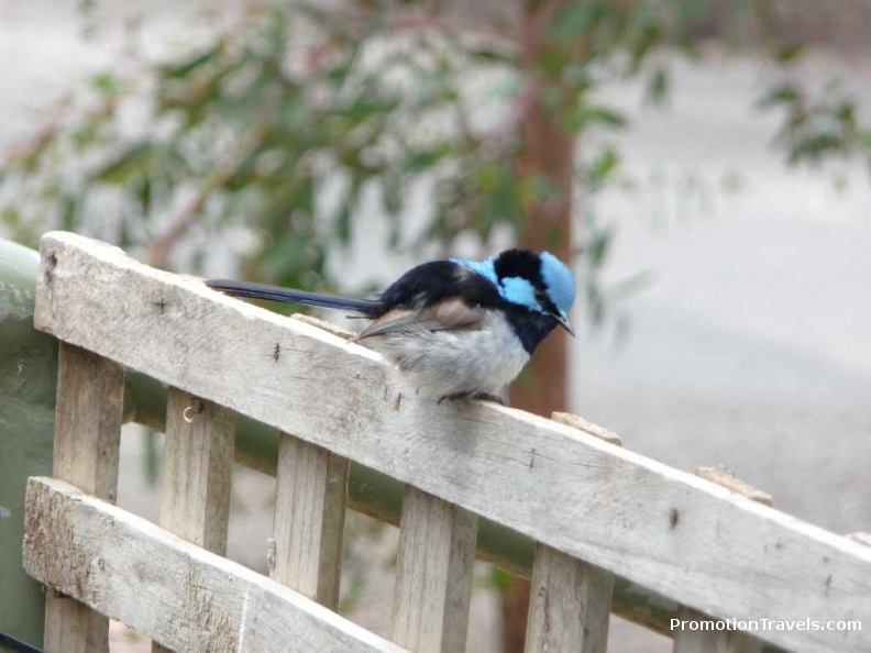 Bird at Hanging Rock.JPG