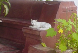 A cat in Goa